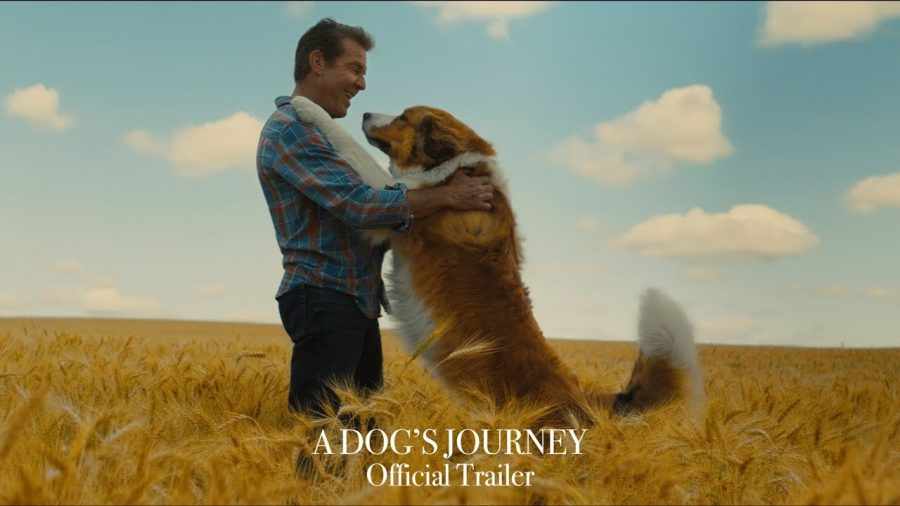 'A Dog's Journey' is the perfect idea of a happy-sad movie