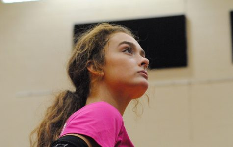 Volleyball breeding passion and success