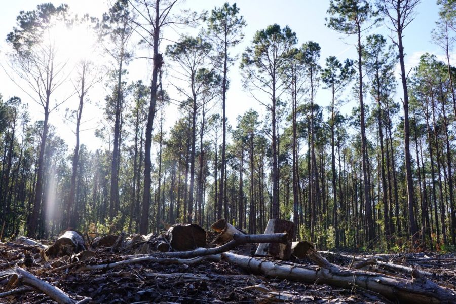 """A pile of felled lumber on the side of the Laurel Hill County Park trail.  """"When you're walking even on the normal trails of the park and you see like a huge patch of trees gone, immediately the feeling that you are in the middle of the woods is gone,"""" Evans said."""