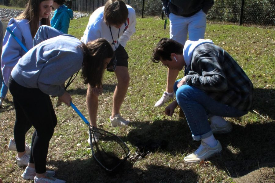 A+group+of+APES+students+sift+through+mud+to+find+an+organism+to+put+in+their+eco-column+